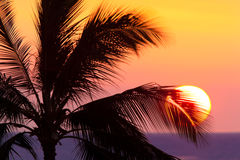 Palm Silhouette. A picture of a sunset over the ocean silhouetting a palm tree Royalty Free Stock Image