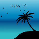 Palm silhouette and birds flying on the shore Stock Photography
