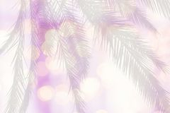 Palm silhouette on blurry lights soft pink. Yellow pastel color background bokeh texture Royalty Free Stock Photo