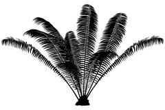 Palm Silhouette Stock Photos