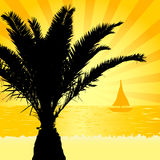 Palm silhouette in the sunset Stock Photography