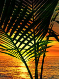 Palm silhouette and sunset. Above sea Royalty Free Stock Photo