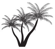 Palm silhouette. Vector illustration. EPS 10. Stock Photos