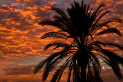 Palm silhouetted in sunset. A palm silhouetted in sunset along the beach on the med in Barcelona Stock Photo