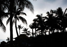Palm silhouettes. Coconut trees at decline in china ilsand - hainan Royalty Free Stock Photos
