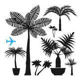 Palm silhouettes Royalty Free Stock Images
