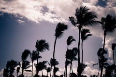 Palm Silhouettes Stock Photography