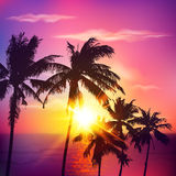 Palm silhouettes on summer sunset Stock Image