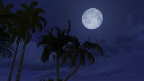 Palm silhouettes under full moon Royalty Free Stock Photo