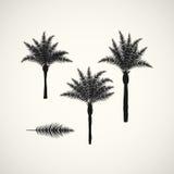 Palm silhouttes op de witte achtergrond Vector illustratie Royalty-vrije Stock Afbeelding