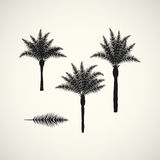 Palm silhouttes on the white background. Vector illustration. Palm silhouttes on the white background. Vector illustration stock illustration