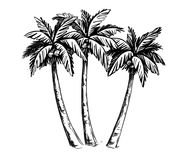Palm sketch hand drawn royalty free illustration