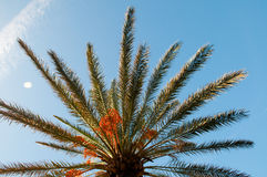 Palm on sky Stock Photo
