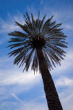 Palm and sky Royalty Free Stock Photos