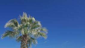 Palm and sky Stock Images