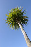 Palm & Sky Stock Photography