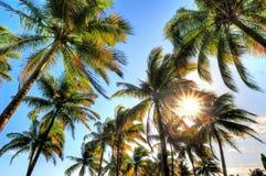 Palm sky Royalty Free Stock Photo