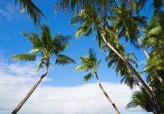 Palm and sky Royalty Free Stock Image