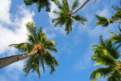 Palm and sky Royalty Free Stock Photo