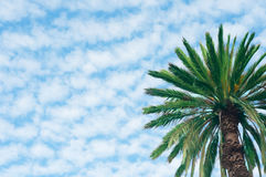 Palm on the sky with clouds background Stock Photo