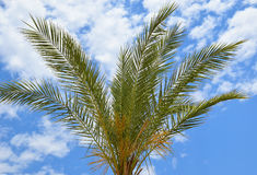 Palm and sky Stock Photography
