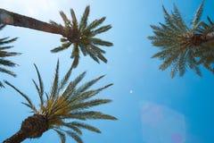 palm sky trees Στοκ Φωτογραφία