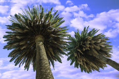 Palm sky vacation. Dreams of holiday under the palm trees Royalty Free Stock Photo