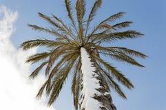 Palm sneeuw Stock Fotografie