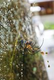Palm spider after the rain. Royalty Free Stock Photography