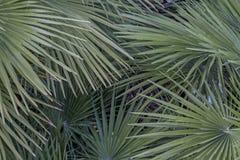 Palm splendo Royalty Free Stock Image