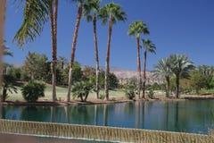 Palm Spring Fotos de archivo libres de regalías