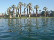 Palm Spring Imagen de archivo libre de regalías