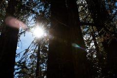 Palm Spring skog Fotografering för Bildbyråer