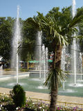 Palm springs. Beautiful park scene in Mamaia, Romania Stock Photos