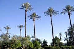 Palm Springs Landscape Stock Photos
