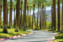 Palm Springs Road. California, United States. Palm Trees royalty free stock photography
