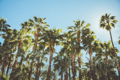Palm Springs Vintage Movie Colony Palm Trees and Mountains. Shot of mountains surrounding Palm Springs California with Palm Trees being the focal point of the stock image
