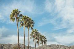 Palm Springs-Weinlese-Film-Kolonien-Palmen und Berge Stockfotos