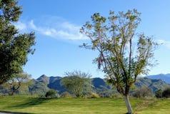 Palm Springsgolfklubb Arkivfoto