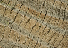 Palm stem bark background close-up detail of a bark from a palm Stock Photos