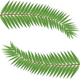 Palm stems. As a frame Royalty Free Stock Photography