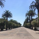 The palm street at San Benedetto del Tronto Stock Photos