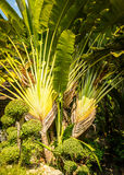 Palm Stock Images