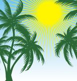 Palm and sun Royalty Free Stock Image