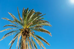Palm and sun Royalty Free Stock Images