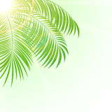 Palm on Sun background Stock Photo