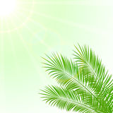 Palm and Sun Royalty Free Stock Photos