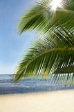 Palm sun sea. Palms in tropical island with sandy beach and sun glinting through stock photos