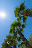 Palm, sun and sky. Royalty Free Stock Photography