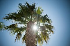 Palm and sun. In a sunny day in Gungodan, Turkey Royalty Free Stock Photo
